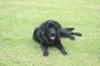 Dog_ran1