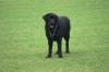 Dog_ran2