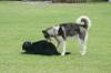 Dog_ran3